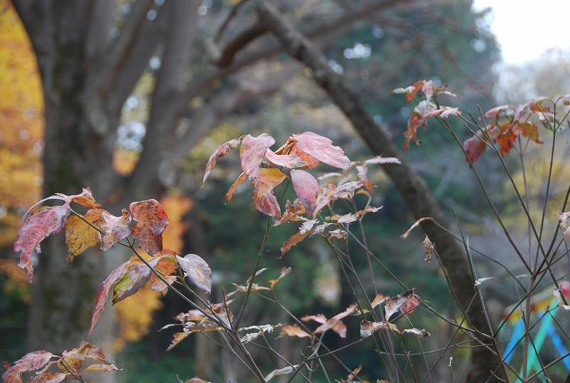 枯葉の与野公園_c0187781_229322.jpg