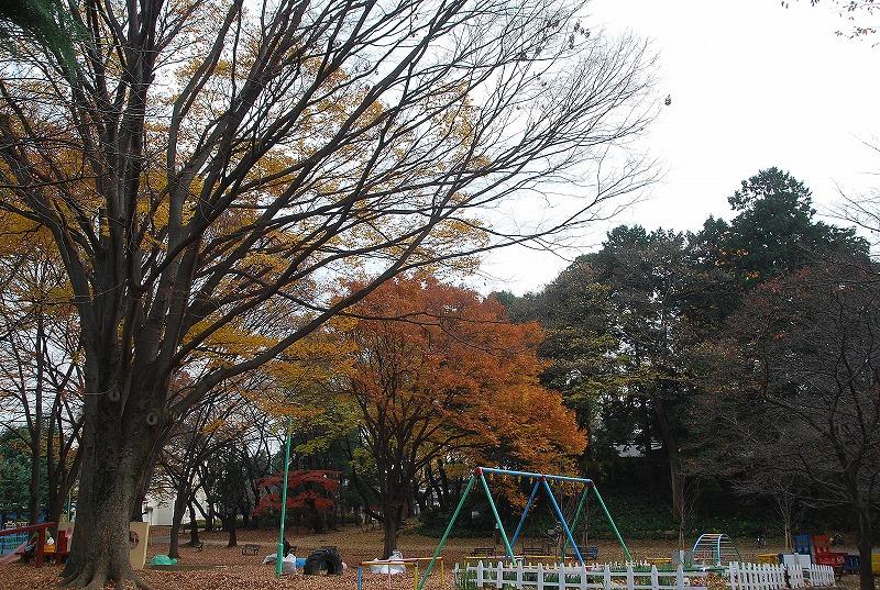 枯葉の与野公園_c0187781_2295282.jpg