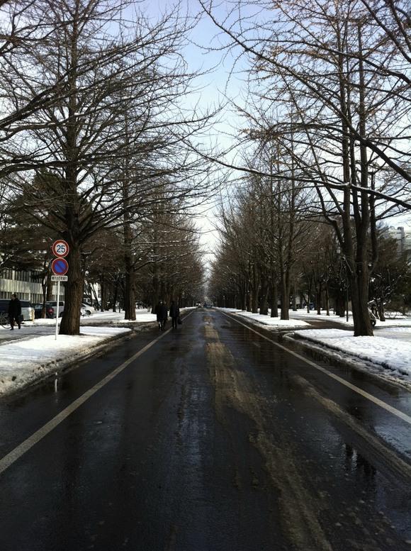 北海道大学_e0203309_21205624.jpg