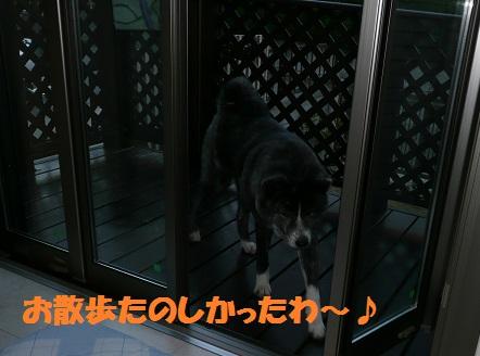 f0121712_41299.jpg