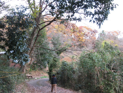 Green Green Village 日田で~~_a0125419_9281949.jpg