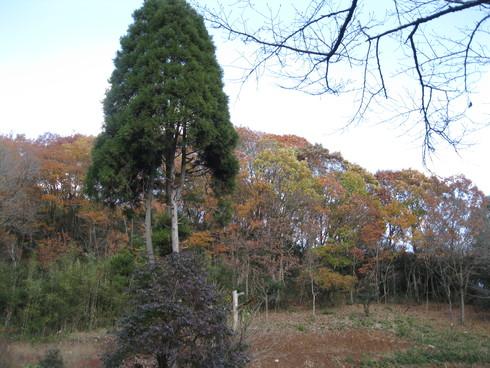 Green Green Village 日田で~~_a0125419_9299100.jpg