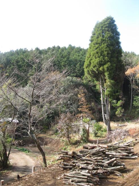 Green Green Village 日田で~~_a0125419_956161.jpg