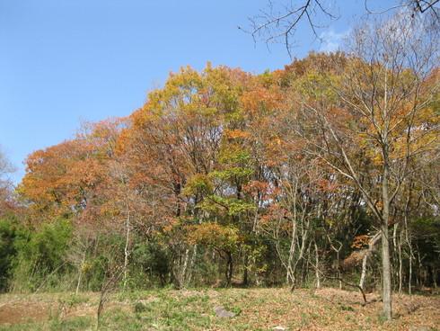 Green Green Village 日田で~~_a0125419_9574766.jpg