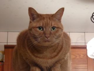 ぴんぽんぱんぽぉーん猫 しぇるろった編。_a0143140_21191543.jpg
