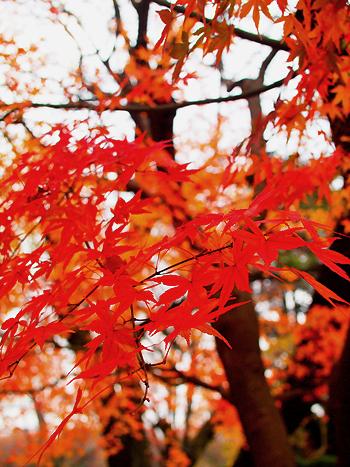 紅葉のじゅうたん_e0172847_16392735.jpg