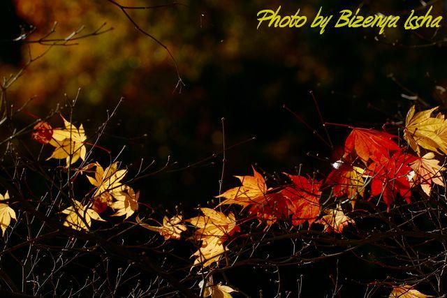 『Leafの受け皿?』_d0086248_6285420.jpg