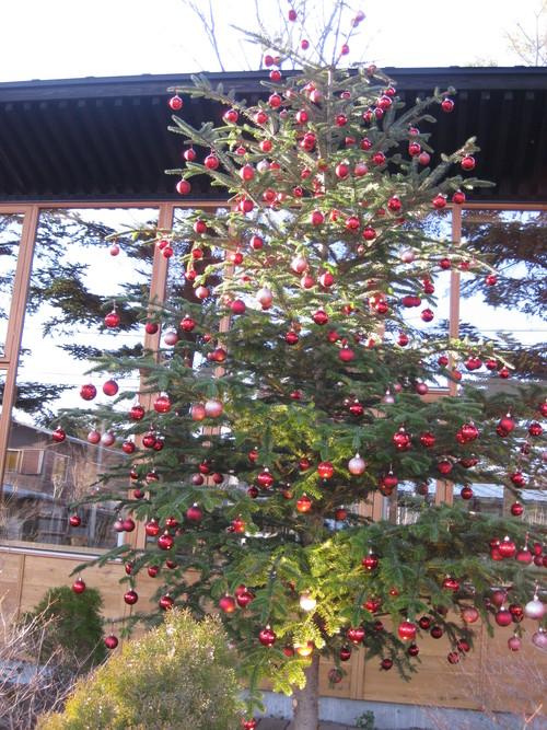 もみの枝で クリスマスリース作り_f0236260_19144029.jpg