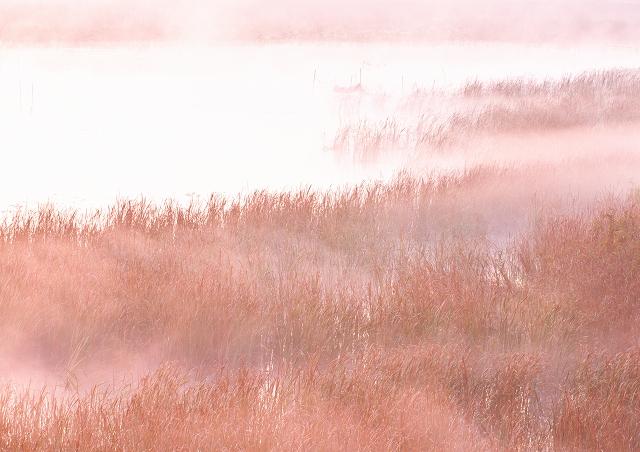 霧の朝 5_f0018464_716501.jpg