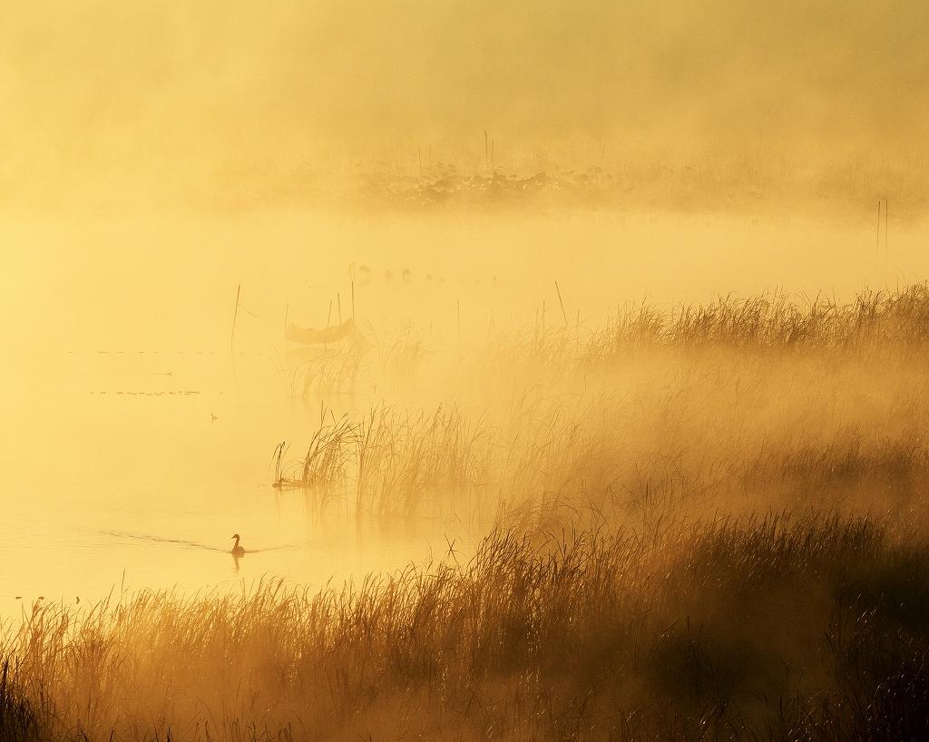 霧の朝 5_f0018464_717104.jpg