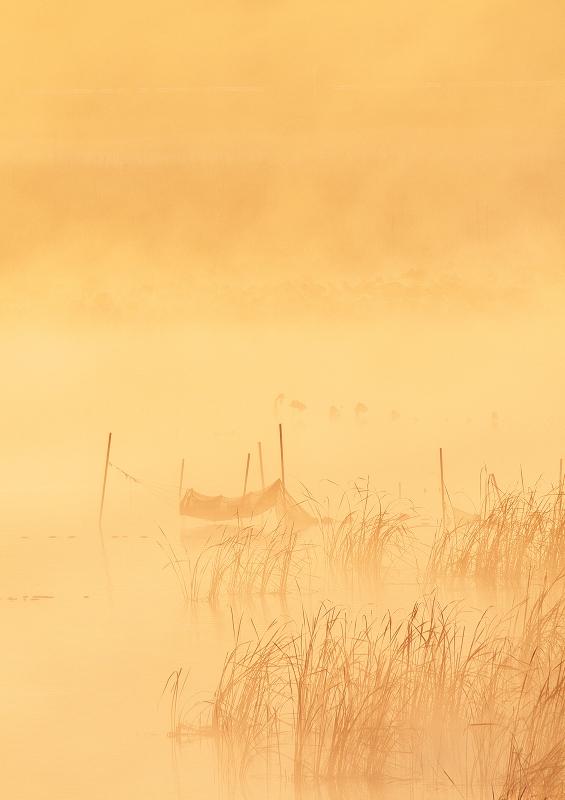 霧の朝 5_f0018464_7171973.jpg