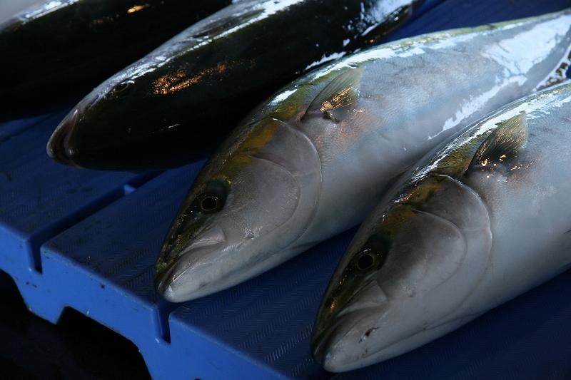 富山 新湊漁協の昼セリ2_c0196076_2335116.jpg