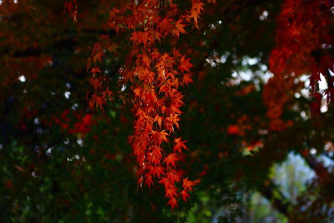 都立野川公園の紅葉 その4_e0165983_13472345.jpg
