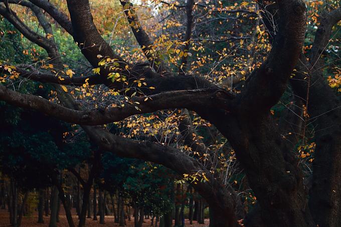 都立野川公園の紅葉 その4_e0165983_13474280.jpg