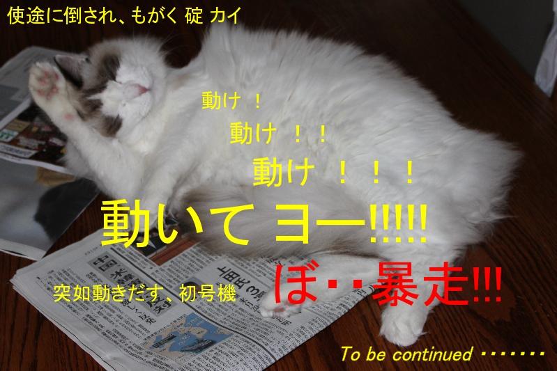 e0214720_1238112.jpg