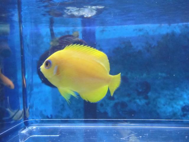 海水魚・サンゴ・水草・淡水魚_f0189122_1324272.jpg