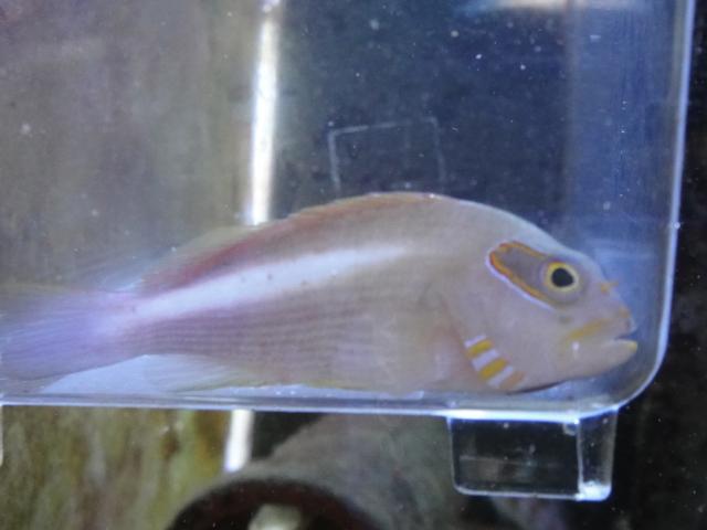 海水魚・サンゴ・水草・淡水魚_f0189122_134388.jpg