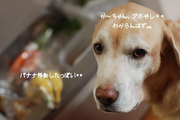 b0138824_16181031.jpg