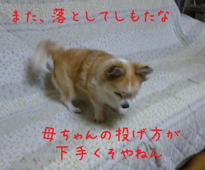 b0138430_1952179.jpg