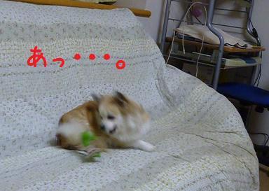 b0138430_19523925.jpg