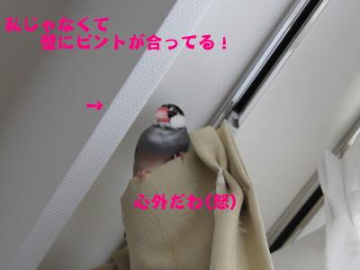 b0158061_2165726.jpg