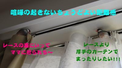 b0158061_21781.jpg