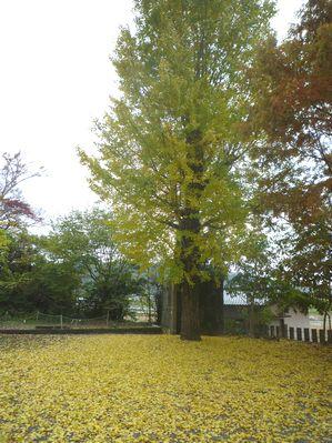 天照神社(1)ついにニギハヤヒの宮へ行きました!_c0222861_20545330.jpg