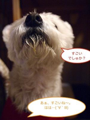 b0177868_20111590.jpg