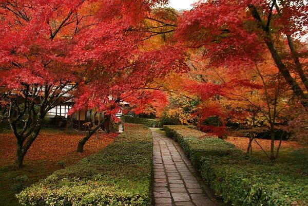 京都・嵐山の紅葉 『西芳寺』 編・その1_d0030373_20521187.jpg