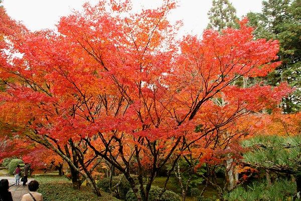京都・嵐山の紅葉 『西芳寺』 編・その1_d0030373_20523259.jpg