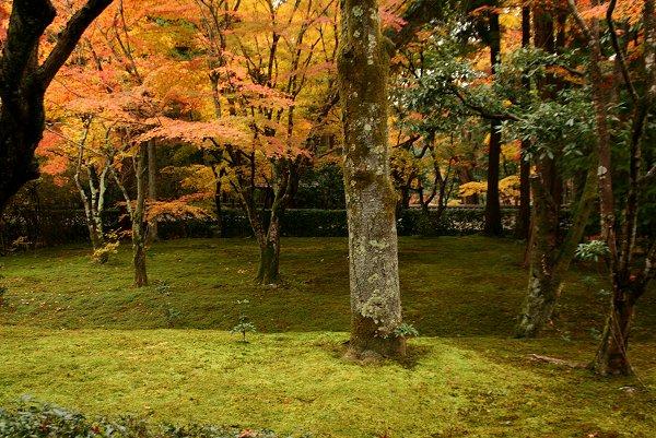 京都・嵐山の紅葉 『西芳寺』 編・その1_d0030373_20524661.jpg