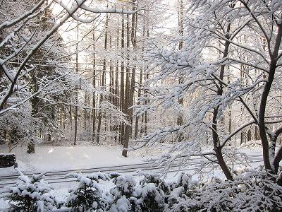 雪_d0133485_8281799.jpg