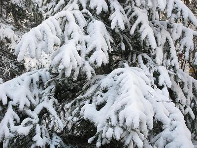 雪_d0133485_828242.jpg
