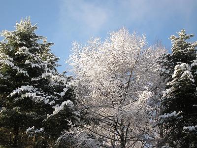 雪_d0133485_8283294.jpg