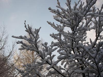 雪_d0133485_828917.jpg