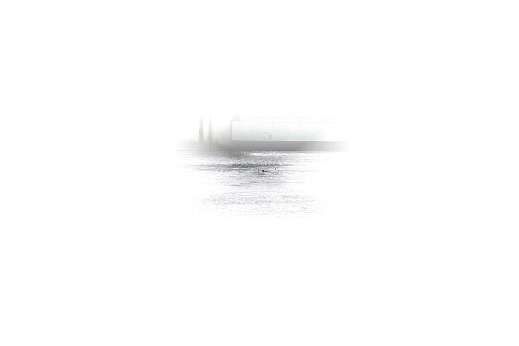 夕暮れ・夕焼けとコウライアイサ_b0024798_692325.jpg