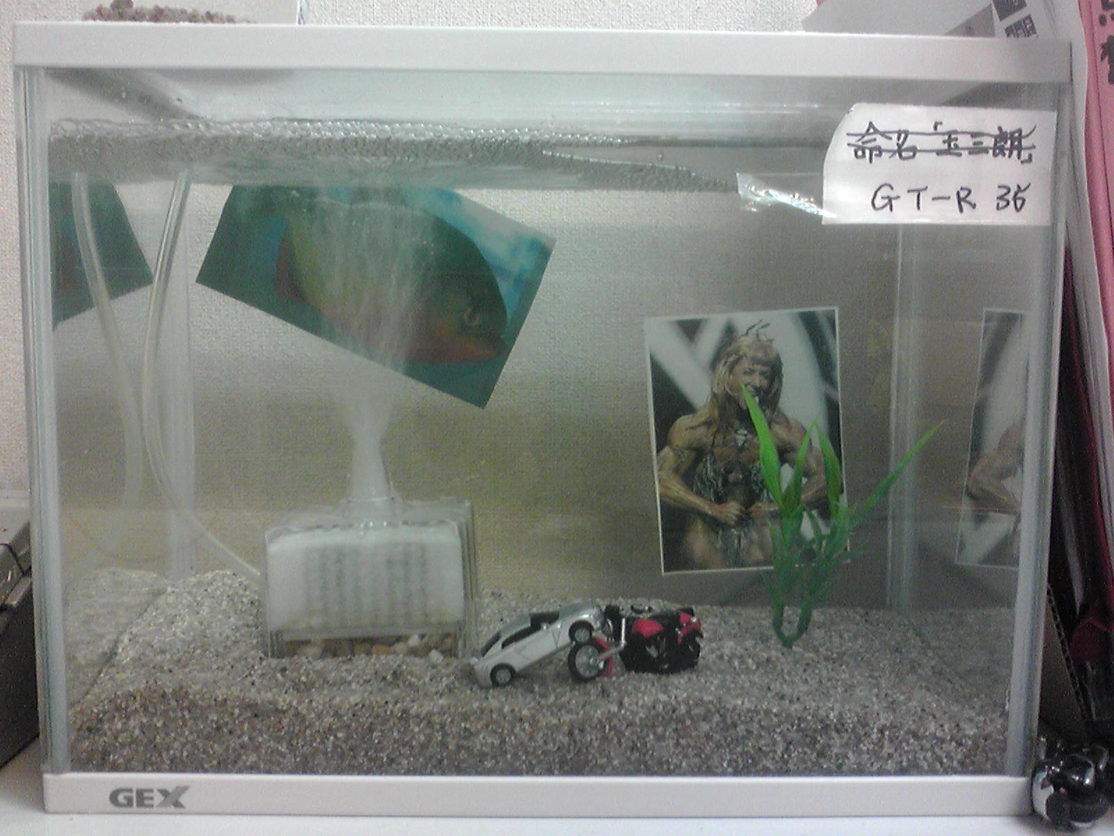 クラゲの玉三朗_c0206900_14414394.jpg