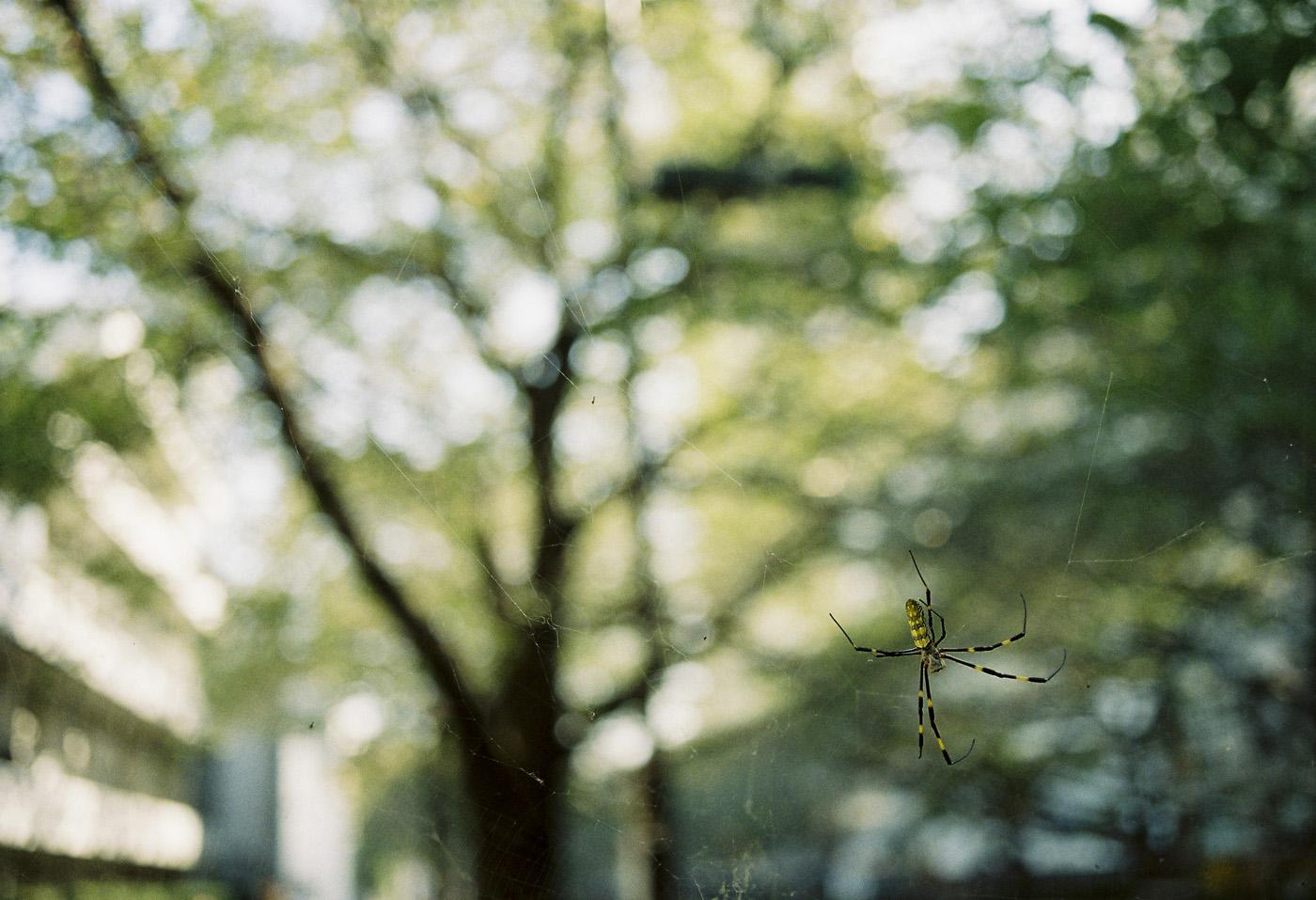 上目黒の蜘蛛。_c0120903_329897.jpg