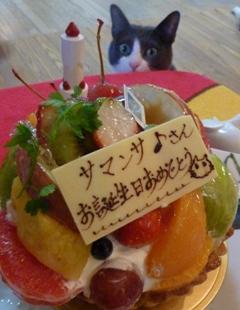 猫のお友だち 珊瑚ちゃん祿太くん + 犬のお友だち イチローくん編。_a0143140_23463655.jpg