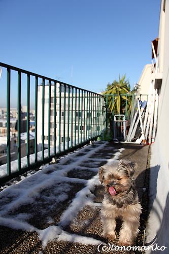大雪が明けた晴れパリ_c0024345_1932665.jpg