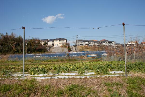 2010/12/09 麻生区黒川界隈_b0171364_1673753.jpg