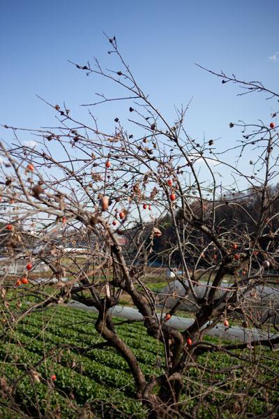 2010/12/09 麻生区黒川界隈_b0171364_1681150.jpg