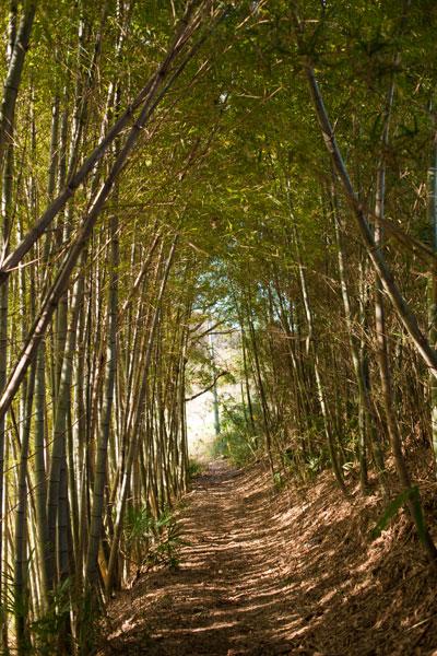 2010/12/09 麻生区黒川界隈_b0171364_169068.jpg