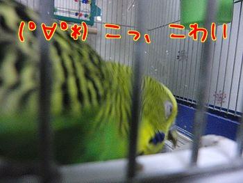 f0196665_064911.jpg