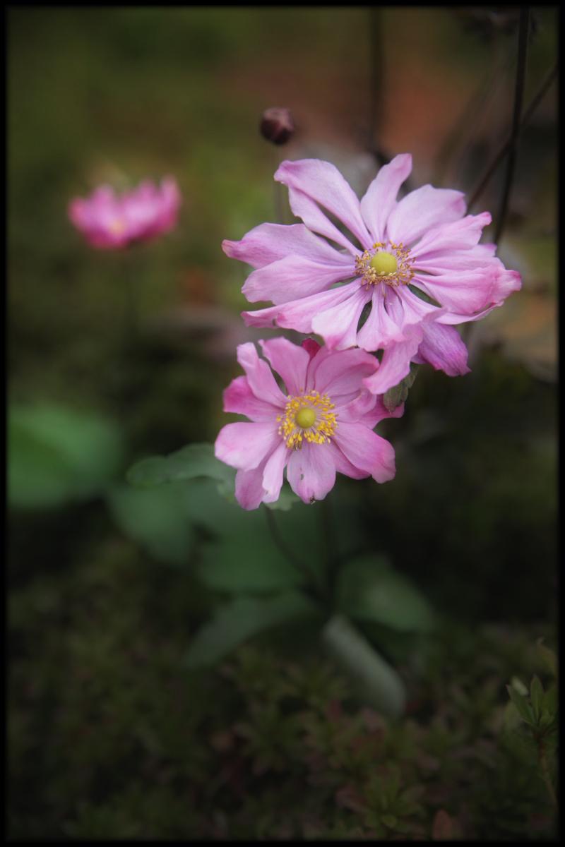 ピンクい花_f0021869_1111395.jpg