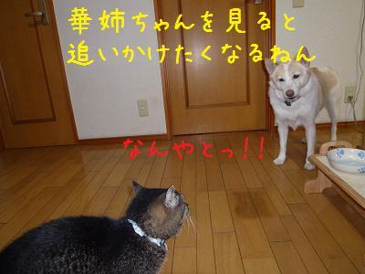 b0138430_195583.jpg