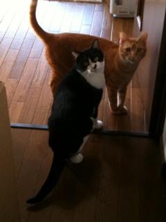 猫のお友だち ジルくんカイくん編。_a0143140_17385057.jpg