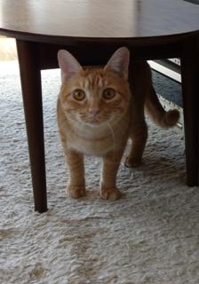 猫のお友だち ジルくんカイくん編。_a0143140_1741255.jpg