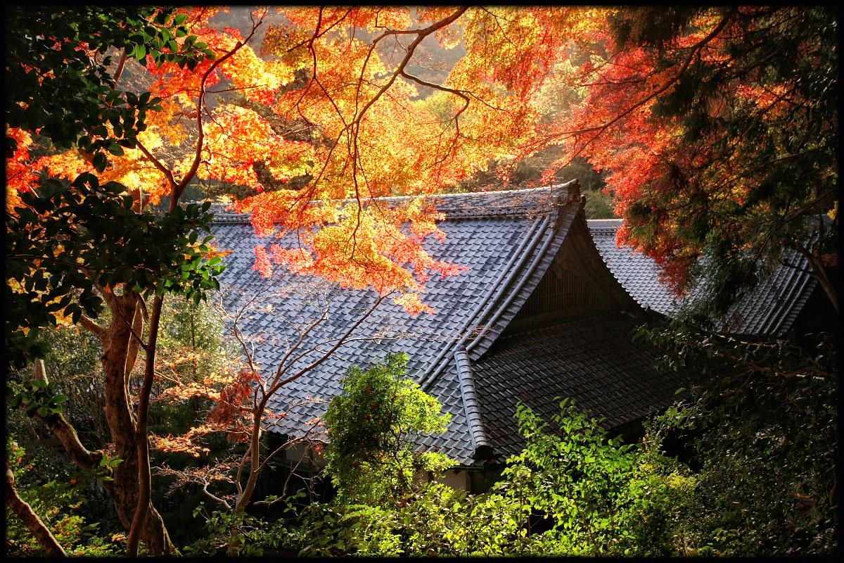 紅葉 2010 <金蔵寺> _f0021869_05176.jpg