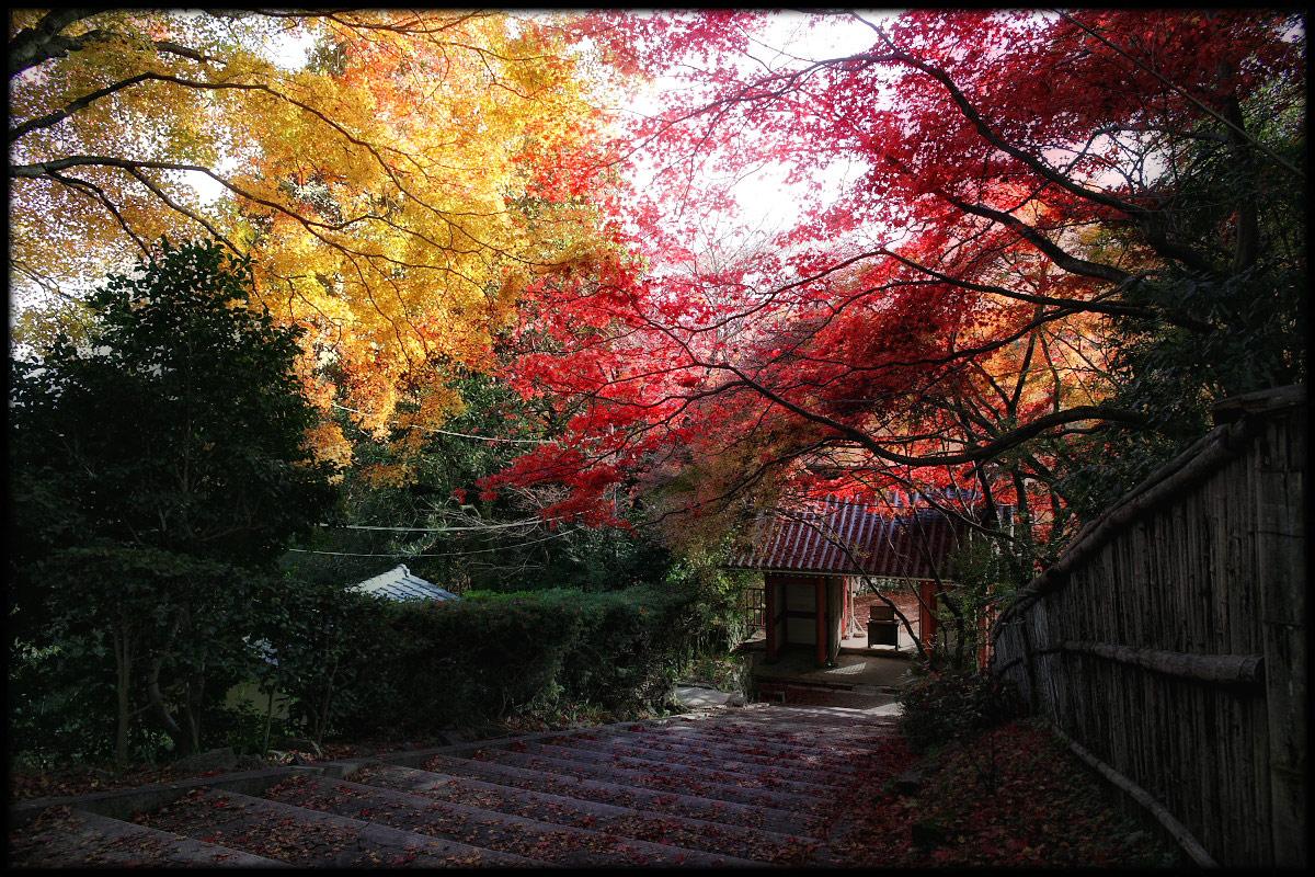 紅葉 2010 <金蔵寺> 2_f0021869_234285.jpg